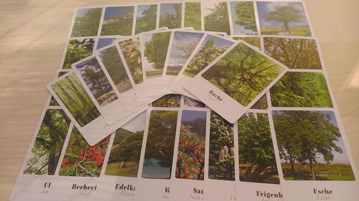 Karten der Bäume