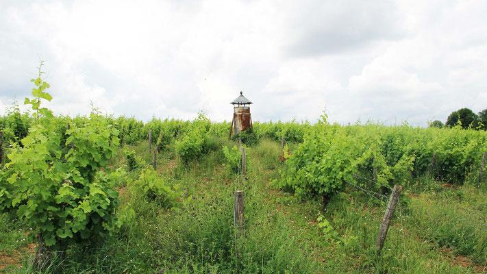 Le Champ du Pré - Chambre d'hôtes Sologne Val de Loire - A faire : Découverte des vins de Touraine au Clos Roussely à Angé