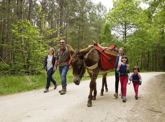Le Champ du Pré - Chambre d'hôtes Sologne Val de Loire - A faire : une promenade en famille avec les ânes de Madame