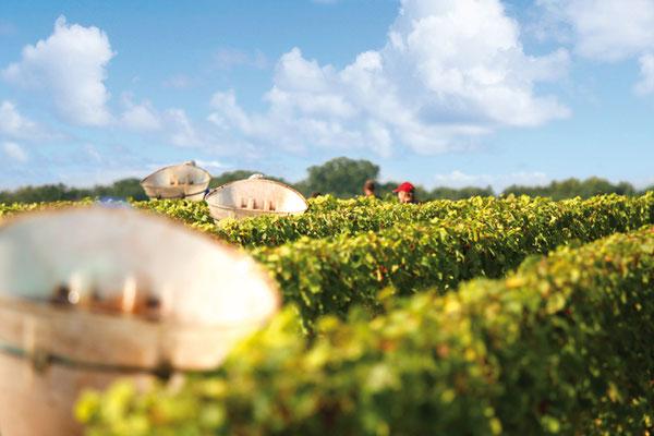 Le Champ du Pré - Chambre d'hôtes Sologne Val de Loire - A faire : Découverte des vins de Touraine au Domaine Jean-Marie Penet