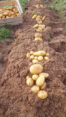 Le Champ du Pré - Chambres d'hôtes entre Sologne et Val de Loire - Pomme de terre SCEA BLAMATINE