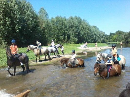 Le Champ du Pré - Chambre d'hôtes Sologne Val de Loire - A faire : promenade en cheval ou poney