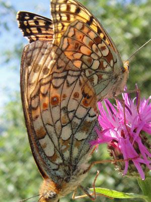 Schmetterlingsspiele
