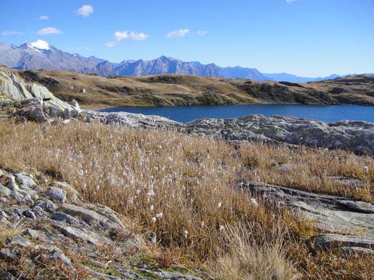 Lago Retico Wollgras