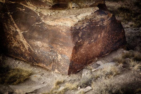 Und auch Petroglyphs haben wir im Petrified Forrest noch gefunden.