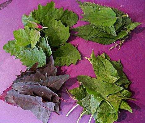 Blätter von Rote Melde, Baumspinat, Guter Heinrich, Brennessel