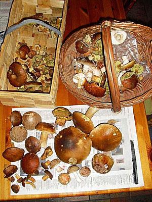 Steinpilze, Maronen, Perlpilze