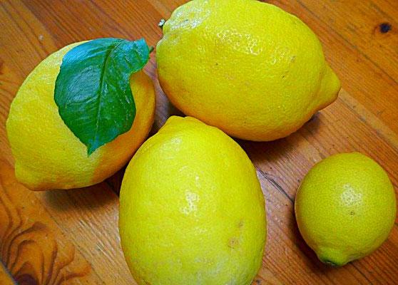 Aromatische Amalfi-Zitronen