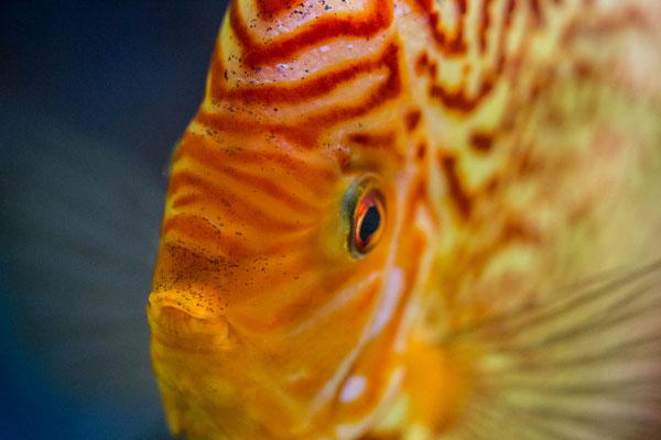 Fische im Exotenhaus | Zoologischer Stadtgarten Karlsruhe | Foto Astrid Hansen