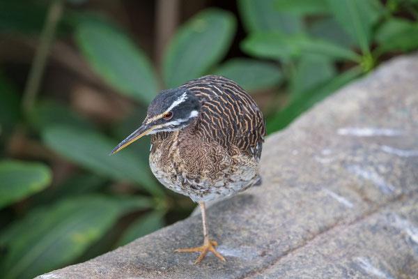 Vogel im Exotenhaus | Zoologischer Stadtgarten Karlsruhe | Foto Astrid Hansen