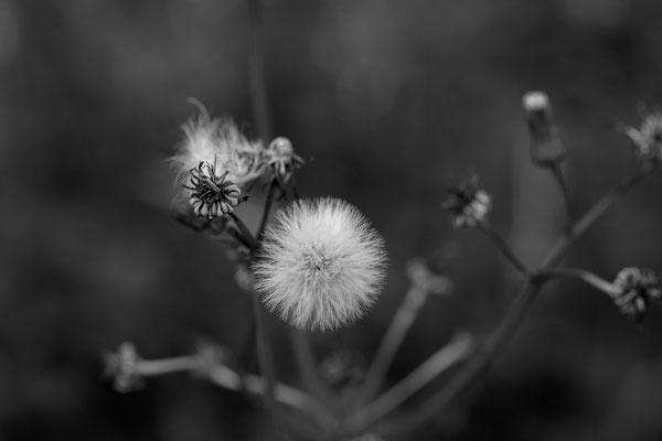 © Astrid Hansen