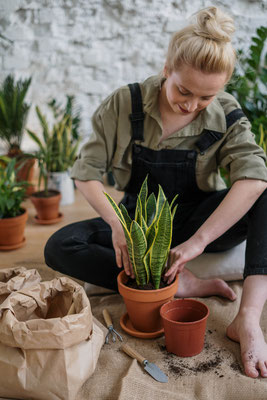 Décoration végétale