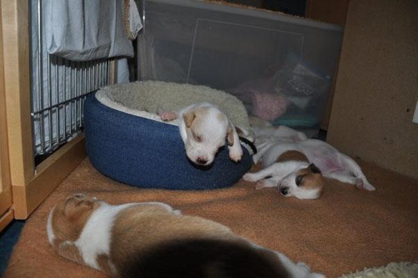 Schlafen kann man in jeder möglichen und unmöglichen Stellung :-)!
