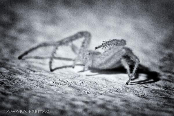 MUHAMMAD ALI - SLUG LIKE A SPIDER