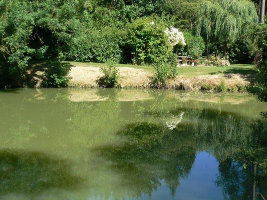 Vue sur l'étang privé - Possibilité de pêcher sans carte