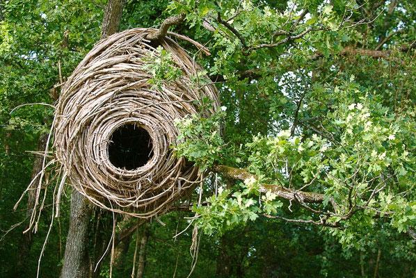 Visite - Le vent des forêts - Michel Petit