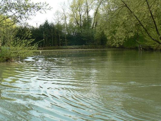 Etang en Meuse - Sampigny (entre Verdun et Commercy)