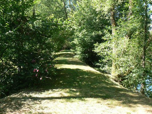 Chemin le long de l'étang