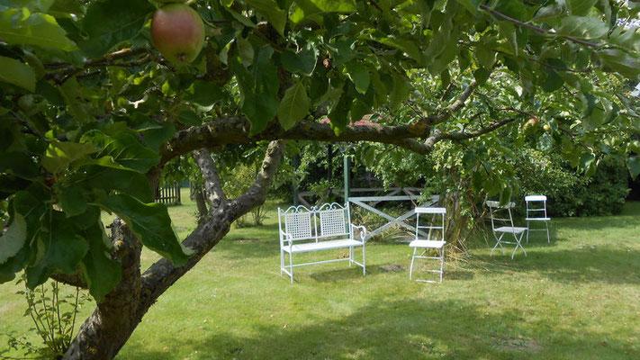 Sitzgelegenheiten unter alten Obstbäumen im Garten