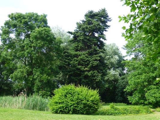 Blick in den Schlosspark auf die alten Bäume
