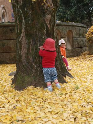 黄色い落葉、大きな木でかくれんぼする二人の子ども