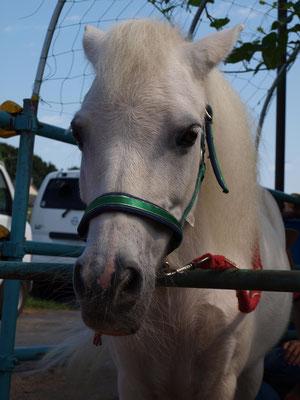 白い馬の顔