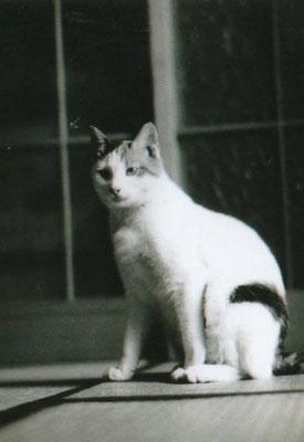 三毛猫ラベルのモデルです。