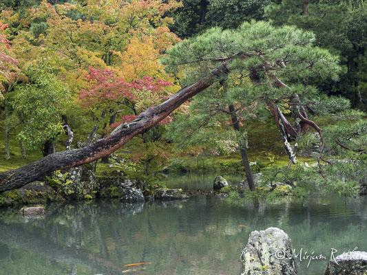 Garten des Tenryuji Zen Tempel in Kyoto, Japan