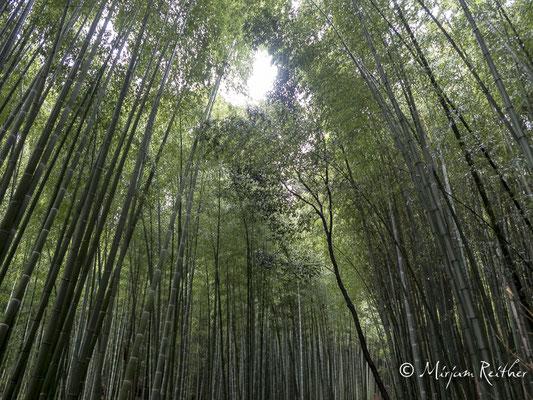 Bambuswald im Stadtteil Arashiyama von Kyoto, Japan