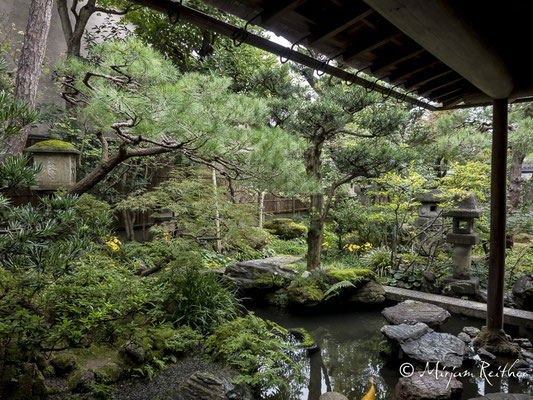 Garten der Nomurake Samurairesidenz in Kanazawa, Japan
