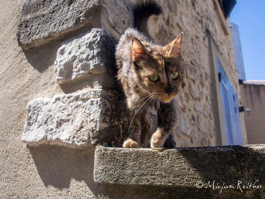 Katze, Provence