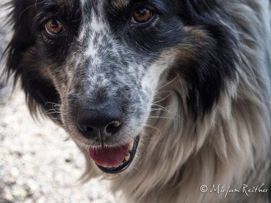Hund, Provence