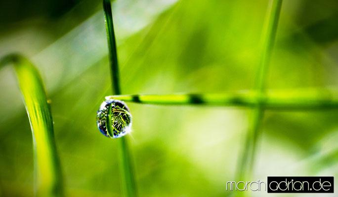 © Marcin Adrian, Wesseling, Morgentau, morning dew