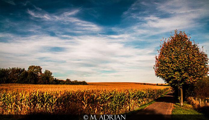 ©, Marcin Adrian, Naherholungsgebiet Entenfang, Naturschutzgebiet Entenfang, Wesseling