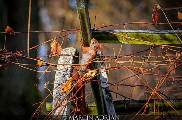 ©, Marcin Adrian, Naturschutzgebiet Entenfang, Wesseling