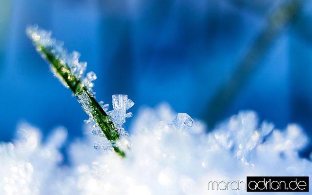 Marcin Adrian, www.marcinadrian.de, Eiskristalle, Ice Crystals, Wesseling