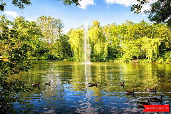 Entenfang Wesseling / springbrunnen am Entenfang Naturschutzgebiet, 50389 Wesseling, #meinWesseling Fotograf aus Wesseling, Köln und Bonn © Marcin Adrian www.marcinadrian.de