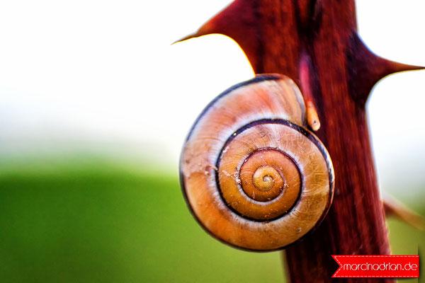 Schneckenschalen snails shells Schneckenschale snail shell Schneckenschalen snailsshells Schneckenschale snailshell Wesseling werbekurier Stadt Wesseling Stadt Wesseling StadtWesseling Wesseling Innenstadt WesselingInnenstadt #ślimak #musza #seashell