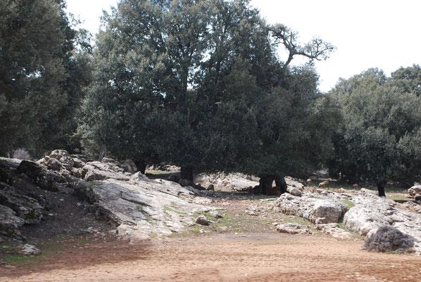 Landschaft mit hellen Felsen (und Schafen)