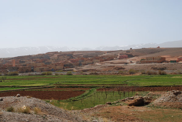 Oase im Oued Dades