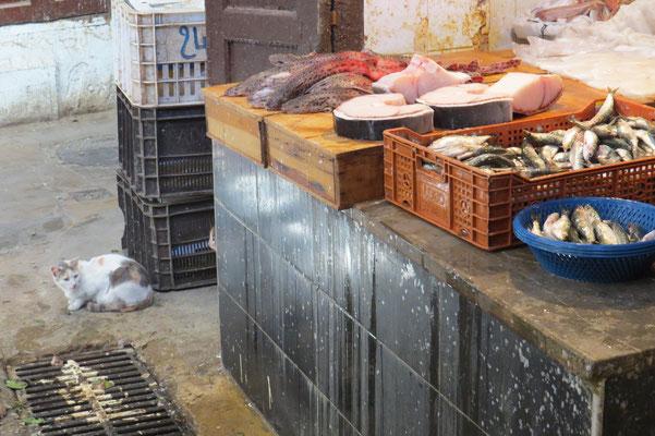 Fischstand im Souk mit Katzenhaien und Katze :-)