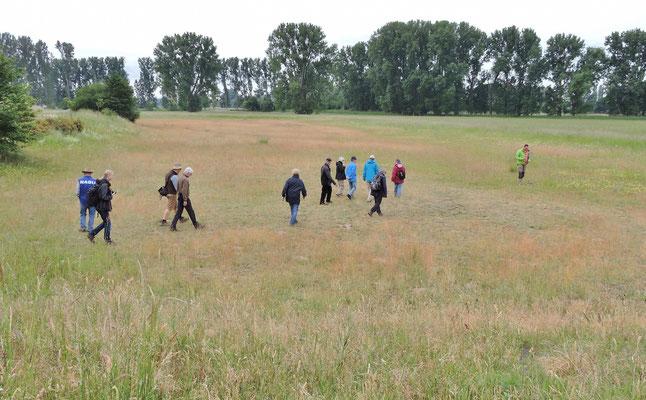 Das besondere Biotop – die Magerwiese
