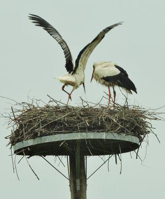 ... Nest am Spielplatz