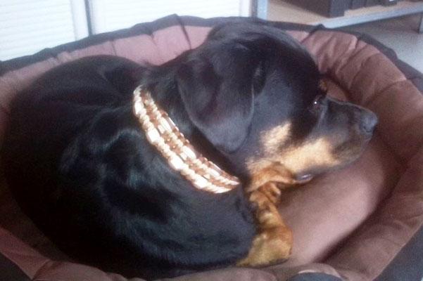 "Rotti-Dame Pia präsentiert ihr neues Halsband ""Twice"" mit EM-Keramik Pipes"