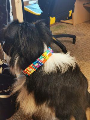 Luna mit ihrem Rainbow EMK-Halsband Typ Trilobite