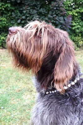 Oskar posiert mit seinem neuen EMK Halsband