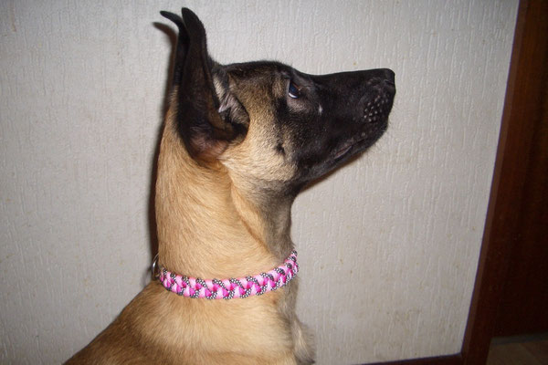 Viper hat jetzt auch ein Girly-Halsband