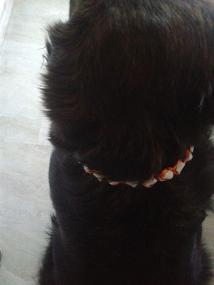 Kjara mit ihrem EMK Halsband