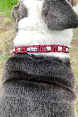 Luna mit neuem EMK Halsband Typ Once