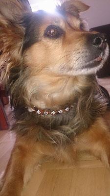 Gucci zeigt stolz ihr neues EMK-Halsband